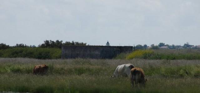 Les rives de la Charente