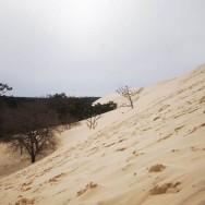 La Dune côté forêt